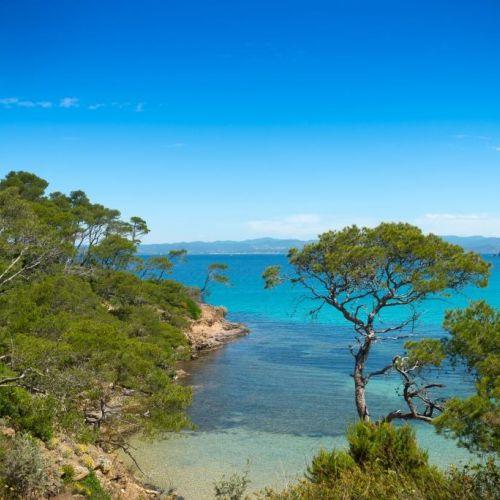 Une crique sauvage avec des eaux claires et des pins sur l'île de Porquerolles dans le sud de la France