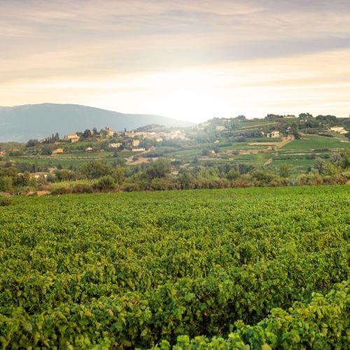 Vignoble de Provence dans le sud de la France
