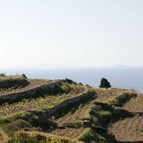 Une vignoble des îles ioniennes en Grèce avec un panorama sur la mer