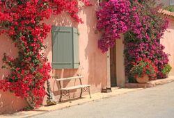 Une façade de maison recouverte d'un superbe bougainvillier en fleurs sur l'île de Porquerolles