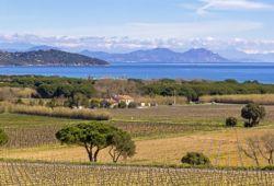 Les vignobles du golfe de Saint-Tropez qui produisent certains des meilleurs vins rosé de Provence