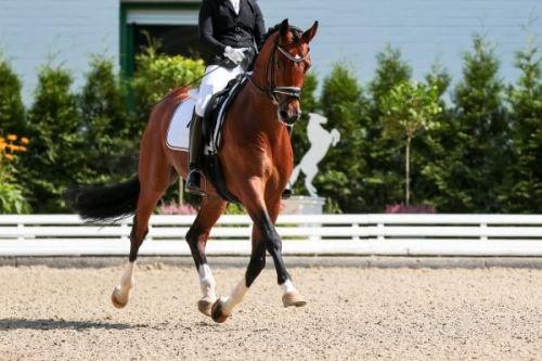 Un cavalier à cheval lors d'une épreuve du Monte-Carlo International Jumping