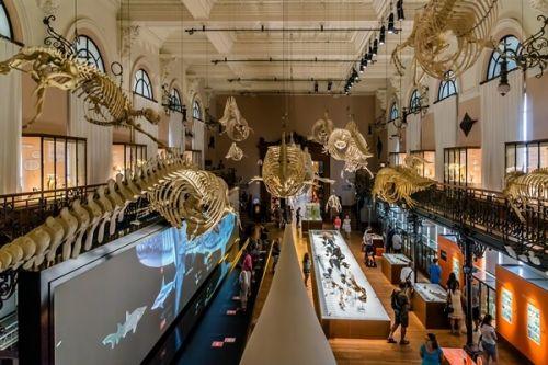 La salle de la Baleine et ses squelettes au Musée océanographique de Monaco