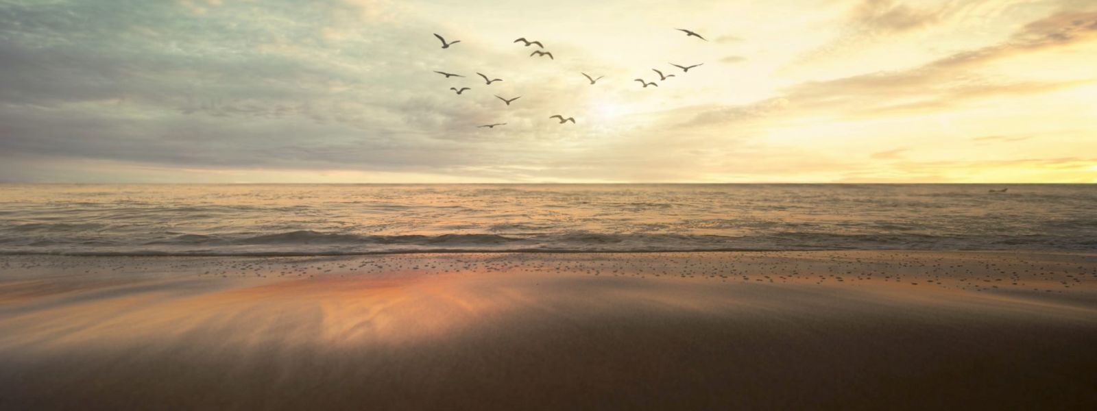 Des oiseaux survolant la mer